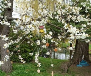 Gartenrundgang im April