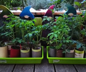Weidenwasser-Experiment, Teil 2 – oder: The Big Rauspflanzening