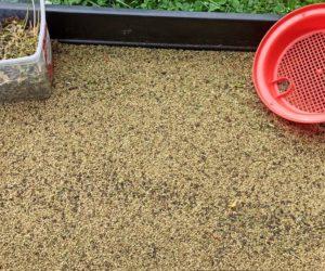 Feldsalat-Samen ernten