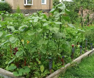 Gartenrundgang Ende Juni / Anfang Juli