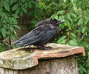 Der Brumme ist gut zu Vögeln, oder: ornitologische Abenteuer