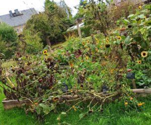 Gartenrundgang September